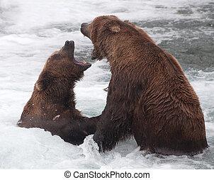 Two Alaskan brown bears fight in the rapiids in Katmai National Park