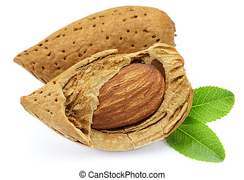 Two almonds with leaves
