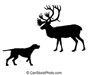 Two animals, setter and caribou meet face to face