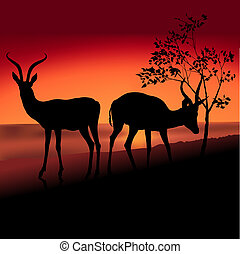 Two Antelopes