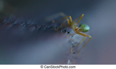 Two ants in a macro shot - A macro shot of two green ants on...