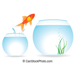 Two aquariums and fish - The gold fish jumps out of an ...
