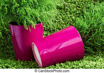two arborvitae in pots on a green background