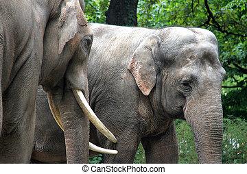 two asian elephants hugging