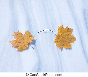Two autumn leaves on snow in the winter