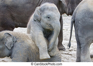 Two baby elephants playing in the sand