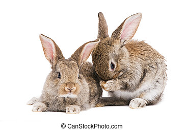 two baby rabbits isolated on white