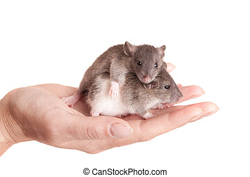 baby rats in the palm