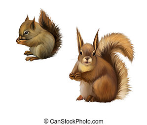 Two baby squirrels - Two squirrels. Isolated realistic ...