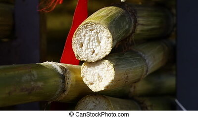 Two bamboo sticks cut - A hand held, extreme close up shot...