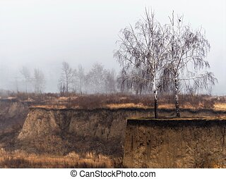 Two bare birch trees on a weathered gorge rim with yellow grass, a bird on a branch, misty late autumn morning