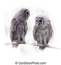 Two Barred Owlets perched on a Branch - Young Barred Owls ...