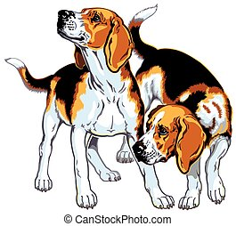 two beagles - two beagle hounds, hunting dogs breed, picture...