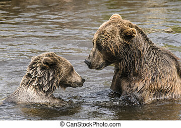 Two bears having a serious conversation