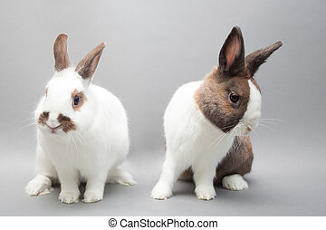 Two beautiful baby bunnies sitting on a solid background