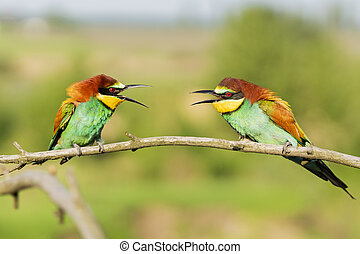 two beautiful colorful birds on a branch communicate