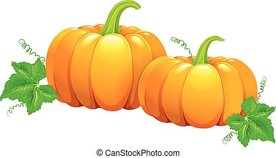 Two beautiful pumpkins