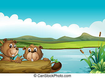 Two beavers - Illustration of the two beavers