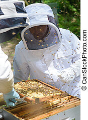 Two beekeepers working on hive