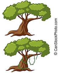 Two big trees with vine