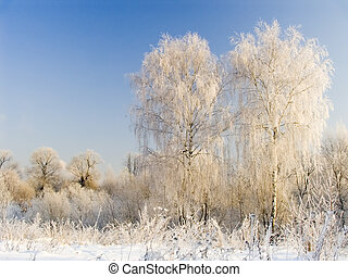 Two birches in hoarfrost