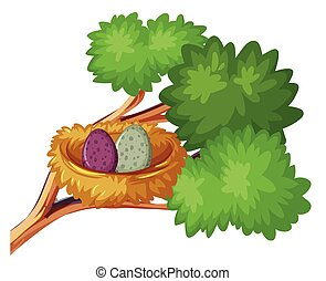 Two bird eggs in nest