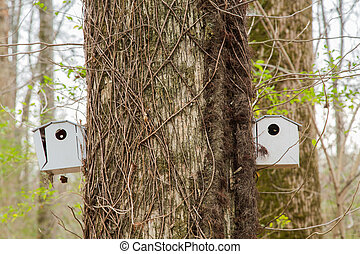 Two Birdhouses on Vine Covered Tree