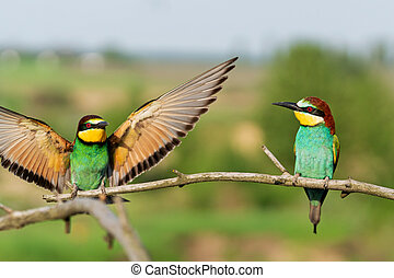 two birds flap their wings on a branch