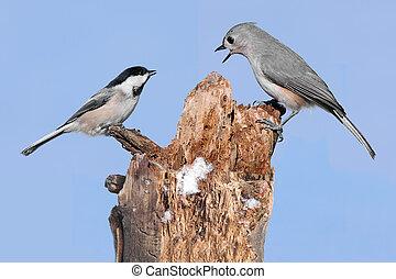 Two Birds On A Stump - Tufted Titmouse (baeolophus bicolor) ...