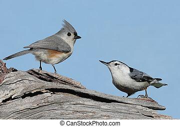 Two Birds On A Stump - Tufted Titmouse (baeolophus bicolor)...