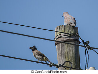 two birds sitting on a telephone pole