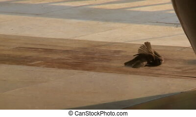 A tracking shot of two small birds wrestling on the ground outside a temple