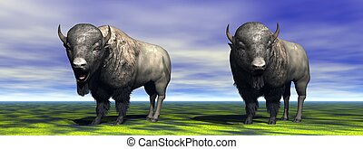 Two bisons which observe