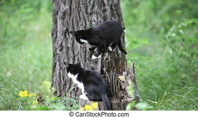 Two black cats playing outdoor