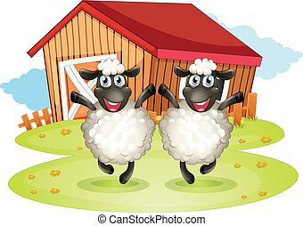 Two black sheeps with a barn at the back
