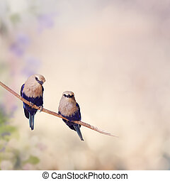 Blue Bellied Roller Birds - Two Blue Bellied Roller Birds...