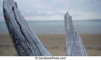 Two branched driftwood in the shoreline - A close up shot of...
