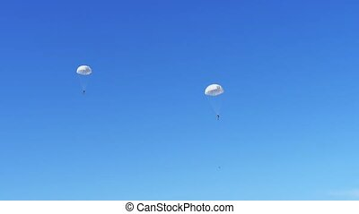 Two brave parachitists swooping on white round parachutes in...