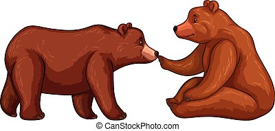 Two brown bears on white background