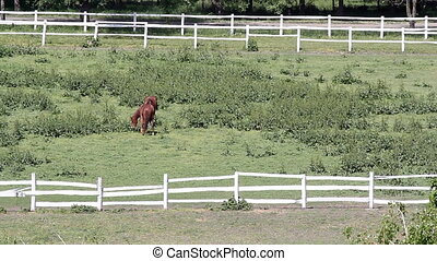 two brown horses in corral