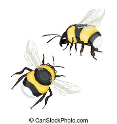 Two bumble bees with wings flying vector illustration ...