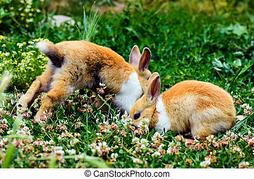 two bunnies in grass