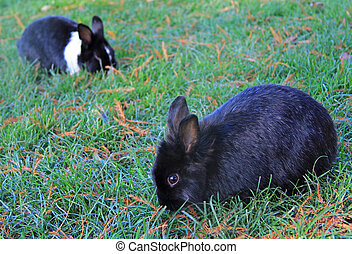 two bunnies in park of Vicenza