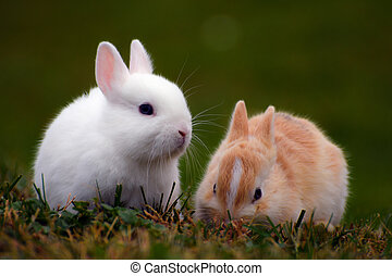 two bunnies in the grass