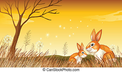 Two bunnies near the grasses