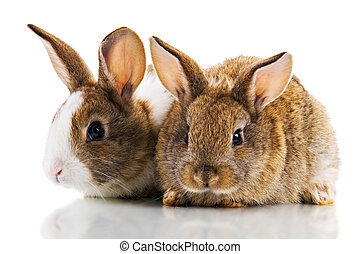 Two Bunnies - Two cute bunnies studio shot, Isolated on...