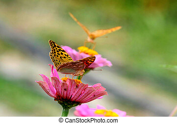 two butterfly on flowers