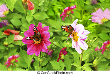 Two butterfly.