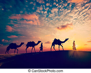 Two cameleers camel drivers with camels in dunes
