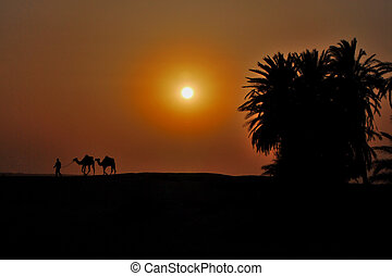 two camels in the desert at sunset